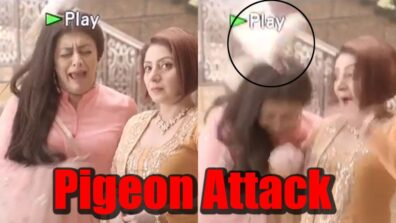Sufiyana Pyaar Mera: Pigeon attacks actors on set