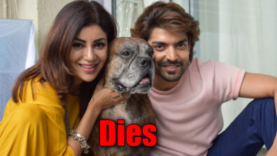 Gurmeet Choudhary's dog dies; actor pens an emotional note
